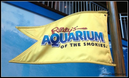 Exploring Gatlinburg Tennessee Ripley 39 S Aquarium And