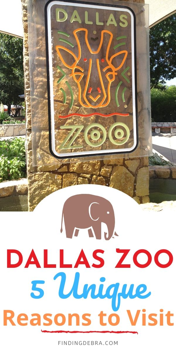 Dallas Zoo - 5 Unique Reasons to Visit