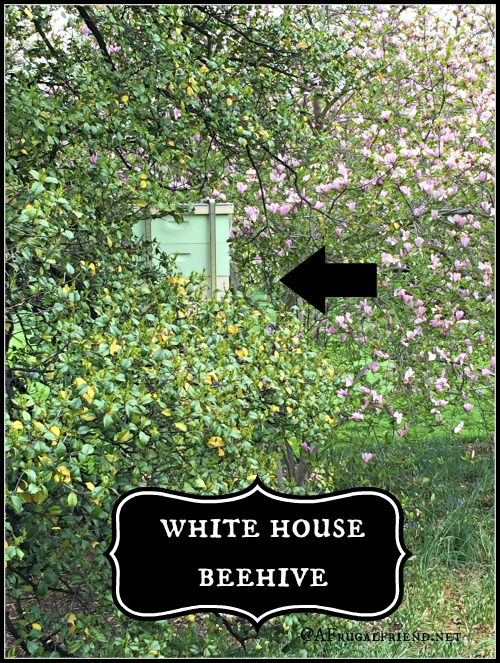 White House Beehive Location
