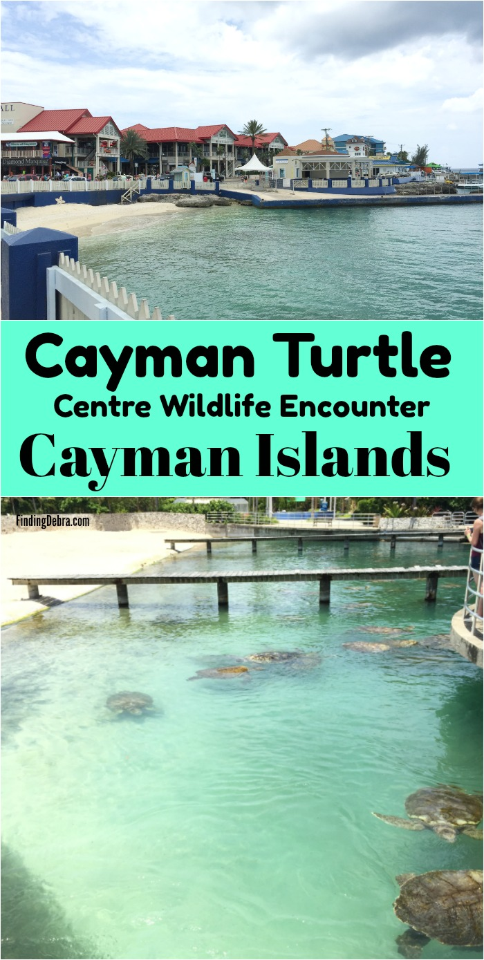 Cayman Turtle Centre island wildlife encounter cayman islands