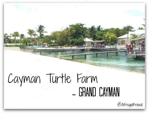 Cayman Turtle Farm Cruise Excursion Grand Cayman