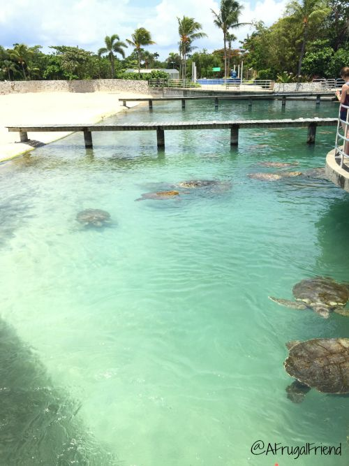 Cayman Turtle Farm Grand Cayman