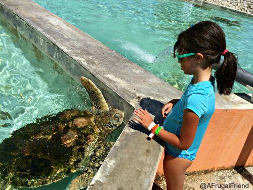 Cayman Turtle Farm Turtle Tank