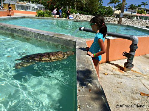 Cayman Turtle Farm Turtle Tanks