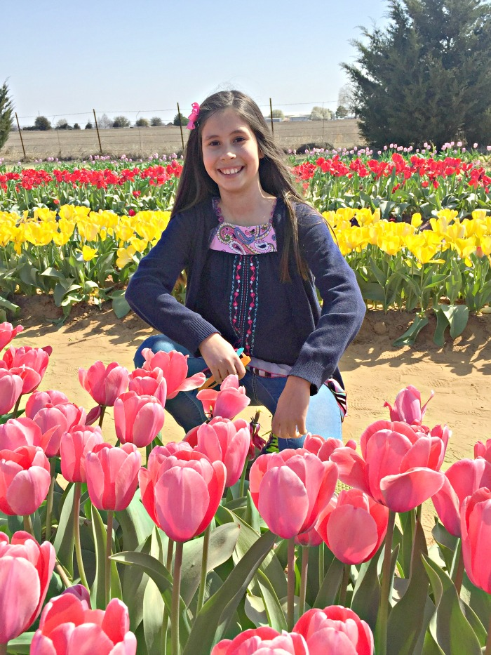 Dallas and San Antonio area tulip fields