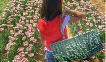Texas-Tulips-Dallas-Area-Fun farm