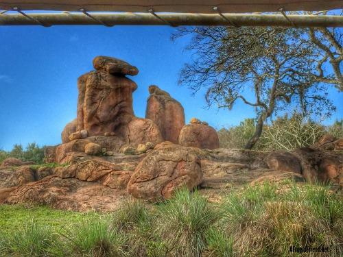 Animal Kingdom Safari Lion