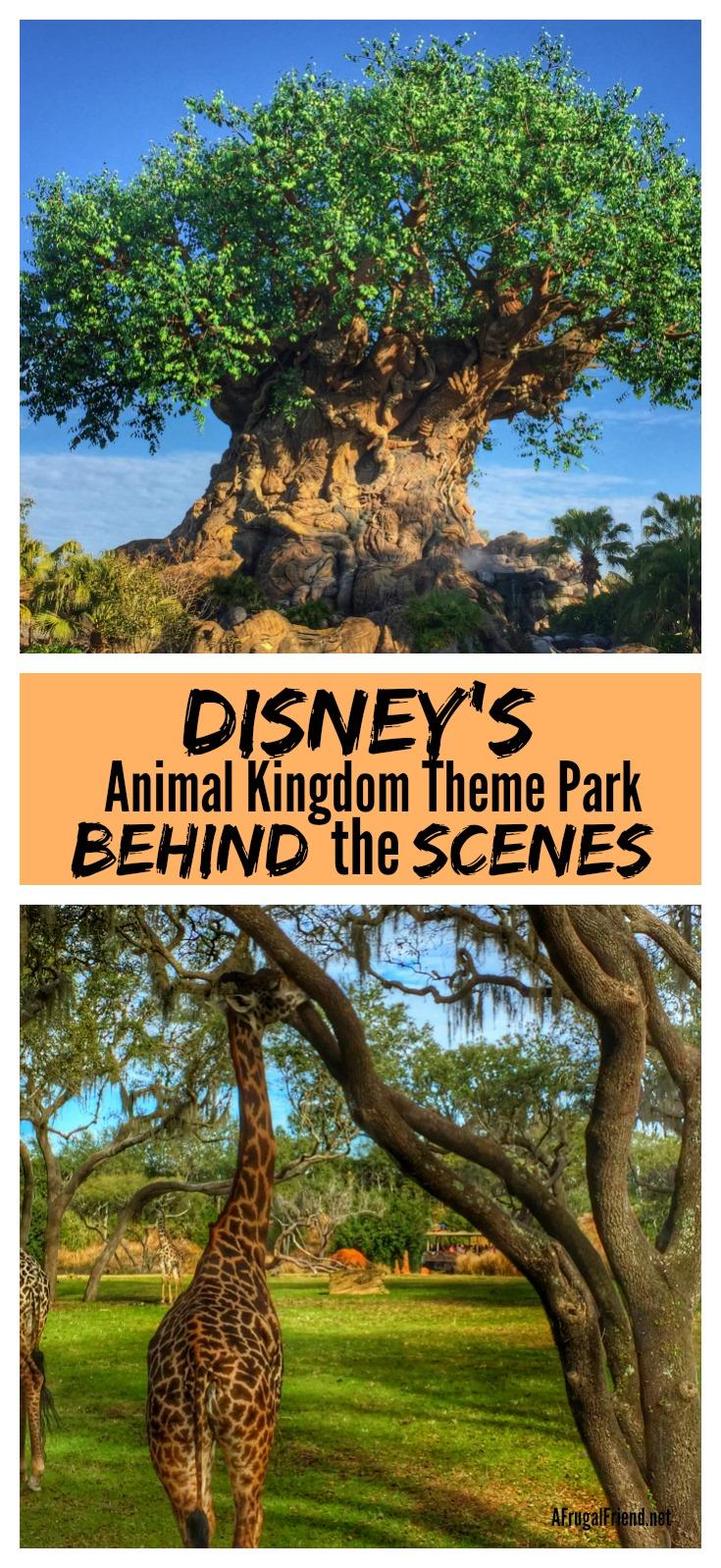 Disney's Animal Kingdom Theme Park Behind the Scenes