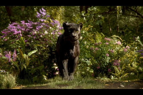 The Jungle Book Bagheera