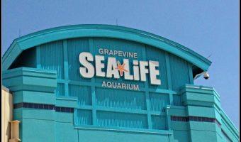 Visiting Grapevine Sea Life Aquarium's New Turtle Rescue Center
