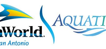 Our Swimming Lessons at SeaWorld's Aquatica – Amazing!