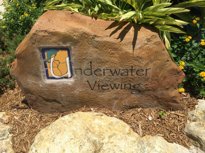SeaWorld Discovery Point Underwater Viewing