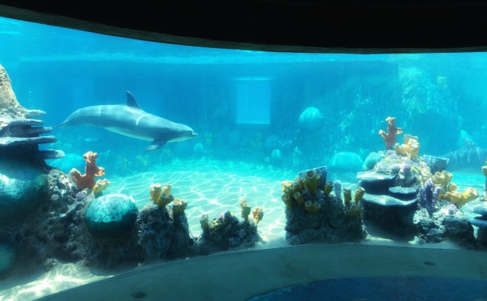 SeaWorld Discovery Point Underwater Viewing Area