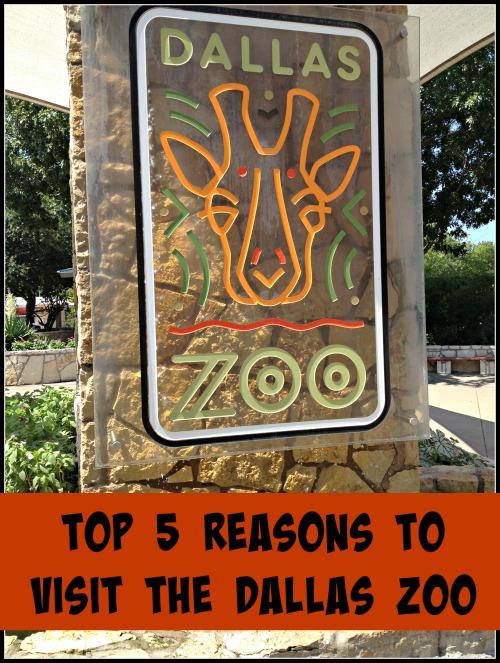 Top 5 Reasons to Visit the Dallas Zoo - It's Unique - Finding Debra