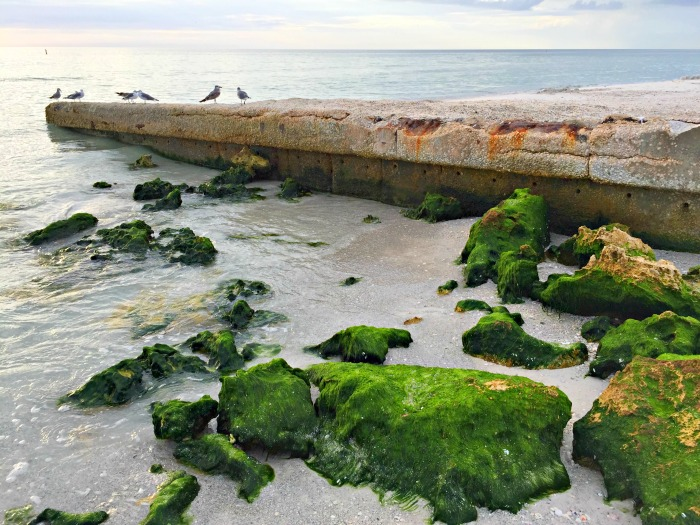 Coquina Beach - A Surprising Florida Beach Discovery - Finding Debra